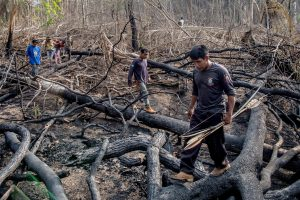 A group of Uru Eu Wau Wau dismantled and prepared to burn a shack built by loggers in the forest.Credit...Victor Moriyama for The New York Times