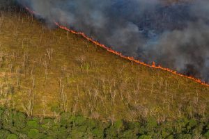 Burning in the Amazon rainforest to clear for cattle grazing in Rondônia in 2019.Credit...Victor Moriyama for The New York Times