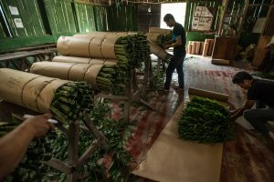 Workers packaged xate, a palm leaf, in Uaxactún, Guatemala. The export program is part of a sustainability effort to encourage communities to harvest responsibly.Credit...Meridith Kohut for The New York Times